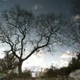 水に映る木、回転版
