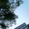 空と葉っぱのコントラスト