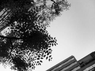 空と葉っぱのコントラスト~モノクロ~