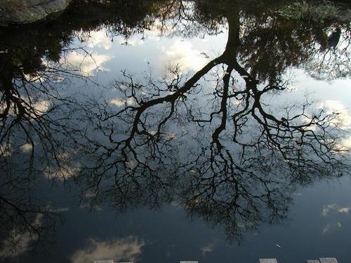 水に映る木