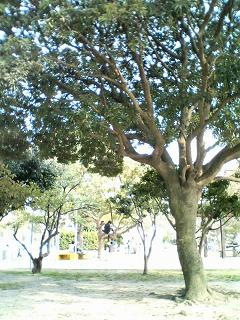 木登りするこども